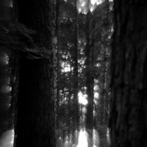 Лес. Монокль._10