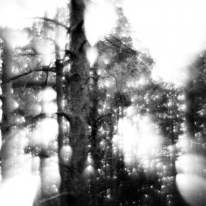 Лес. Монокль._11