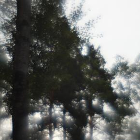 Лес. Монокль._12