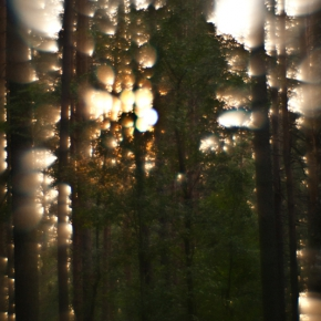 Лес. Монокль._14