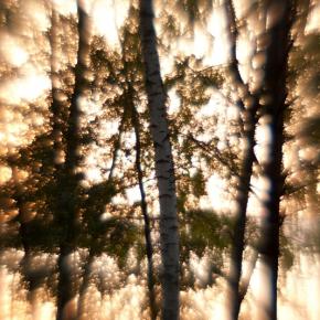Лес. Монокль._17
