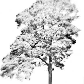 Лес. Монокль._1