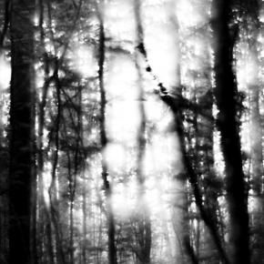 Лес. Монокль._3