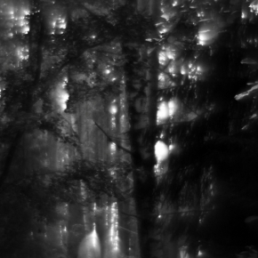 Лес. Монокль._4