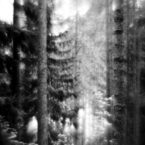 Лес. Монокль._6