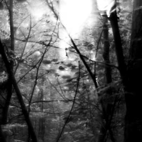 Лес. Монокль._9